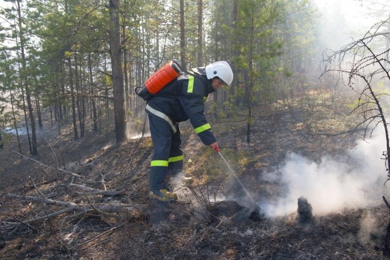 пажарник с водным пестиком.jpeg